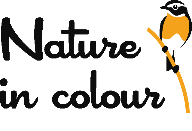 Nature in colour